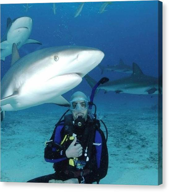 Scuba Diving Canvas Print - Shark Dive - Dinner Is Served by Bald Adventures