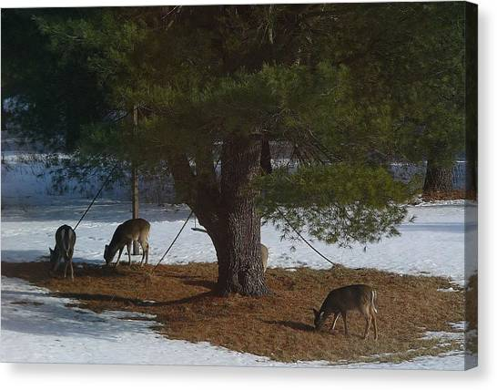 Kangaroo Canvas Print - Deer by Jackie Russo