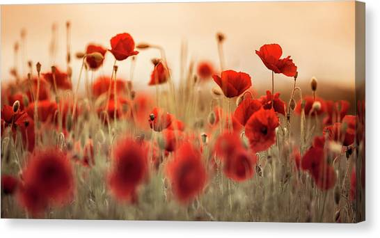 Corn Field Canvas Print - Summer Poppy Meadow by Nailia Schwarz