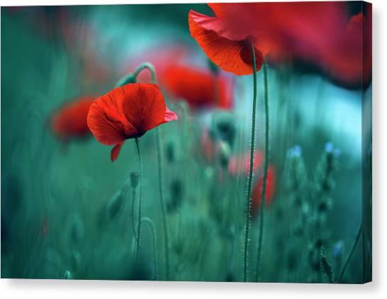 Botanical Garden Canvas Print - Poppy Meadow by Nailia Schwarz