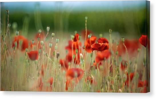 Corn Field Canvas Print - Summer Poppy Meadow by Nailia Schwarz