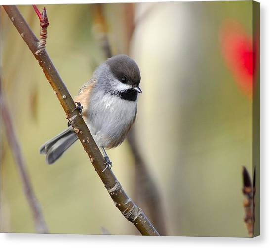 Titmice Canvas Print - Bird by Super Lovely