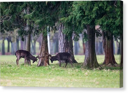 Pheasants Canvas Print - Deer by Jackie Russo