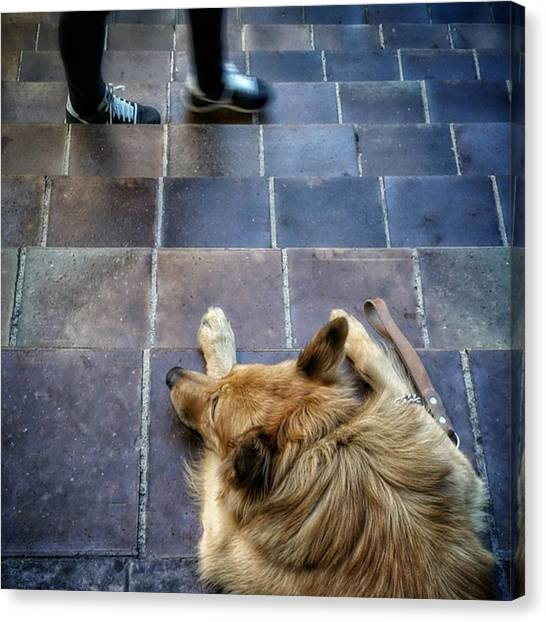 Feet Canvas Print - 2feet And 2vak #dog #animal #pet by Rafa Rivas