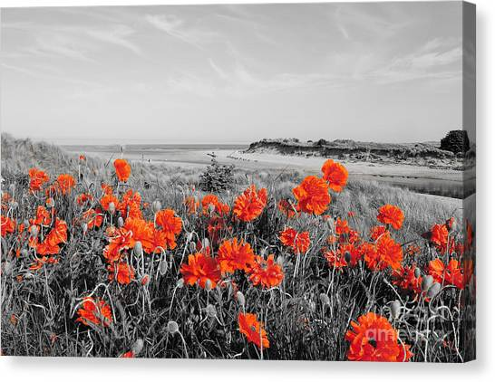 Northumberland Canvas Print - Alnmouth by Smart Aviation