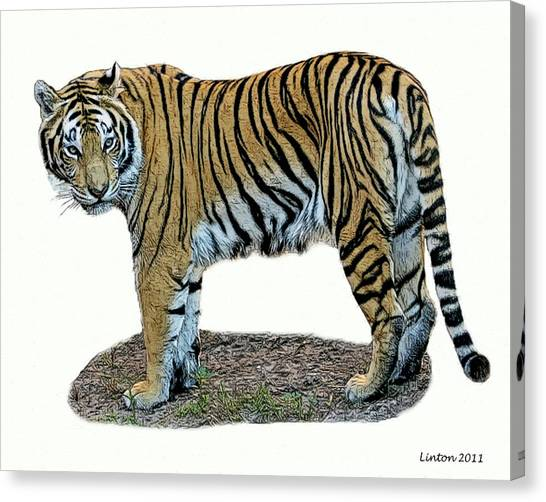 Asian Tiger Canvas Print by Larry Linton