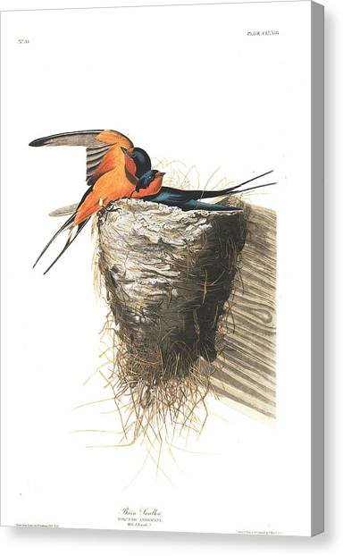 Swallows Canvas Print - Barn Swallow by John James Audubon