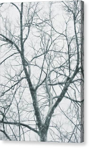 Blizzard Canvas Print by JAMART Photography