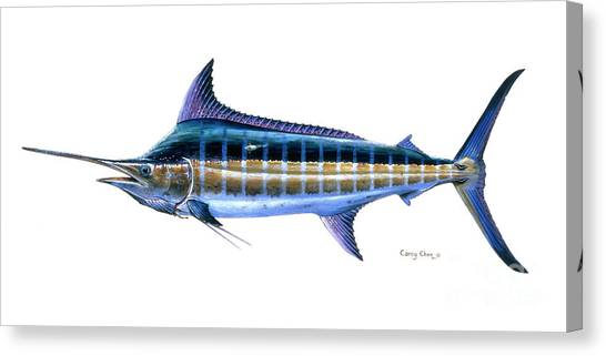Tiger Sharks Canvas Print - Blue Marlin by Carey Chen