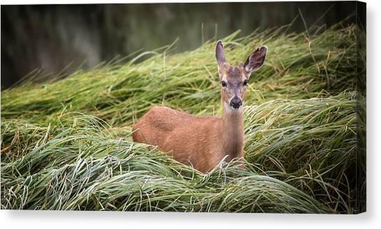 Llamas Canvas Print - Deer by Maye Loeser