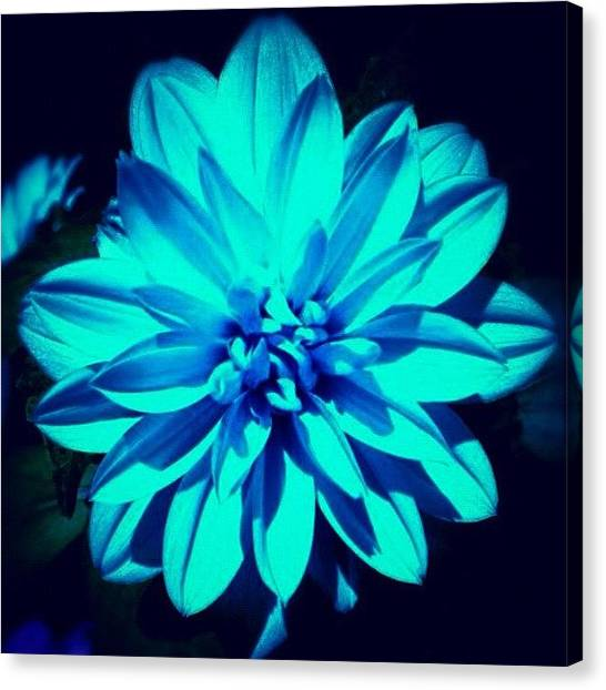 Edit Canvas Print - Flower by Katie Williams