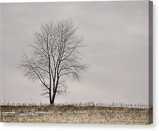 February Horizon   Canvas Print by JAMART Photography