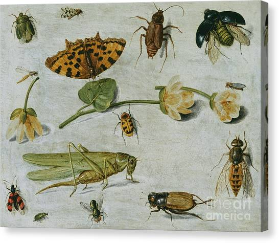 Grasshoppers Canvas Print - Insects by Jan Van Kessel
