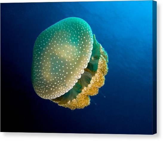 Sea Canvas Print - Jellyfish by Tatiania Laning