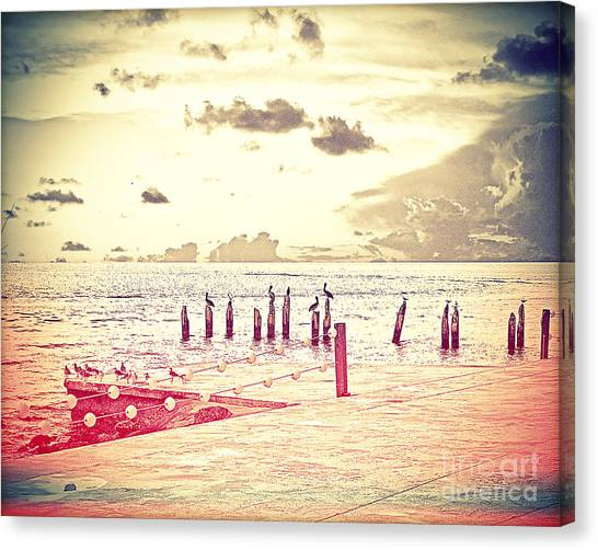 Island .oasis Canvas Print - Key West Pelicans by Chris Andruskiewicz