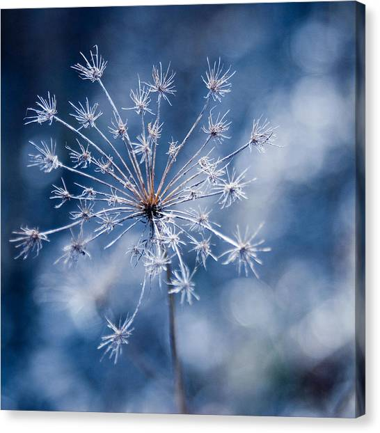Lonely Winter Canvas Print by Ryan Heffron