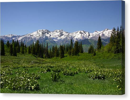 Mountain Spring Canvas Print