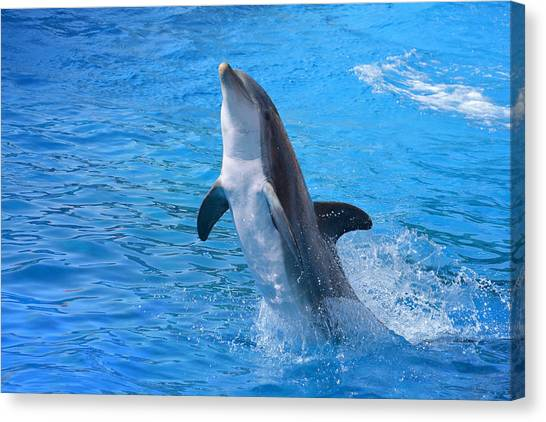 Bottlenose Dolphins Canvas Print - Out Of The Blue by Fraida Gutovich