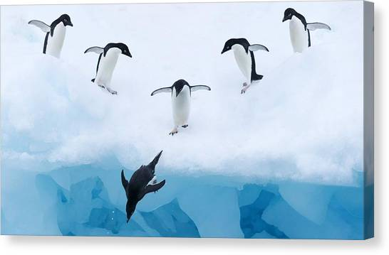 Ibis Canvas Print - Penguin by Maye Loeser