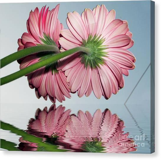 Pink Gerbers Canvas Print