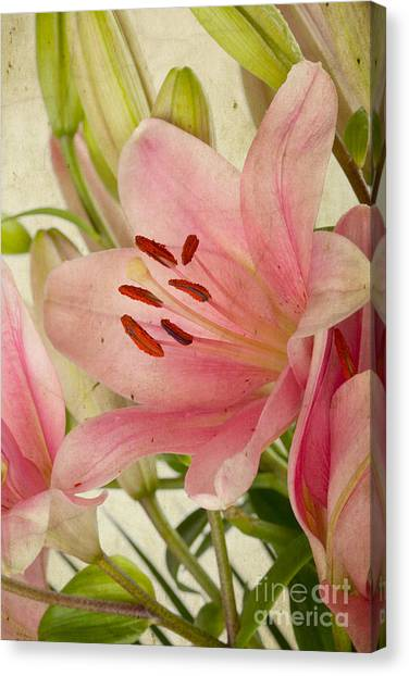 Old Age Canvas Print - Pink Lilies by Nailia Schwarz
