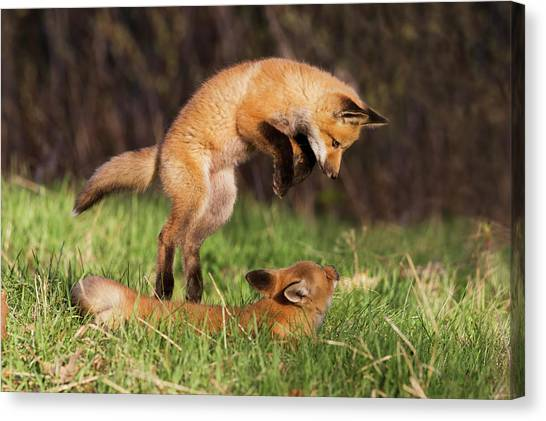 Kung Fu Canvas Print - Playtime by Mircea Costina Photography