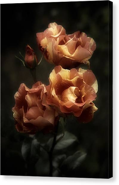 Tequila Sunrise Canvas Print - 3 Plus 1 Romantic Roses by Richard Cummings