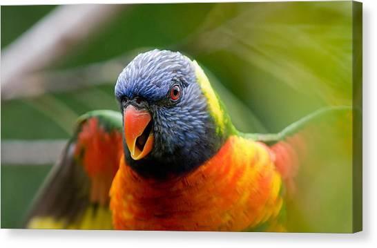 Macaws Canvas Print - Rainbow Lorikeet by Mariel Mcmeeking