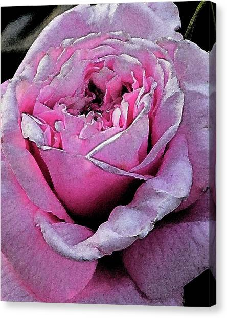 Rose Canvas Print by Michele Caporaso