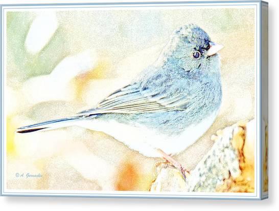 Slate-colored Junco, Snowbird, Male, Animal Portrait Canvas Print