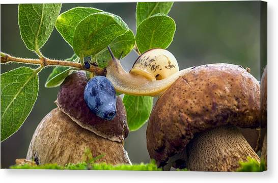 Fruit Trees Canvas Print - Snail by Super Lovely