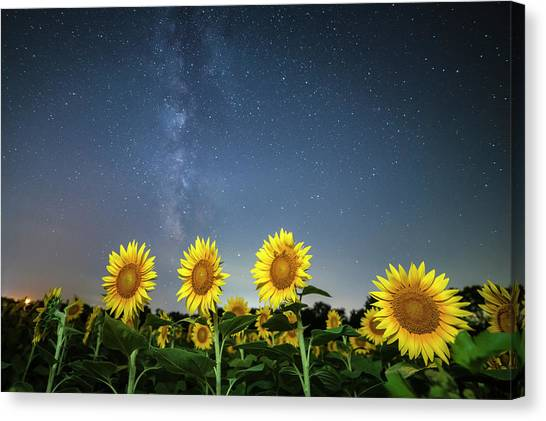 Sunflower Galaxy Iv Canvas Print