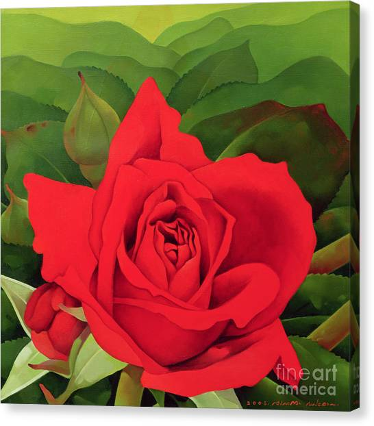 Rose In Bloom Canvas Print - The Rose by Myung-Bo Sim