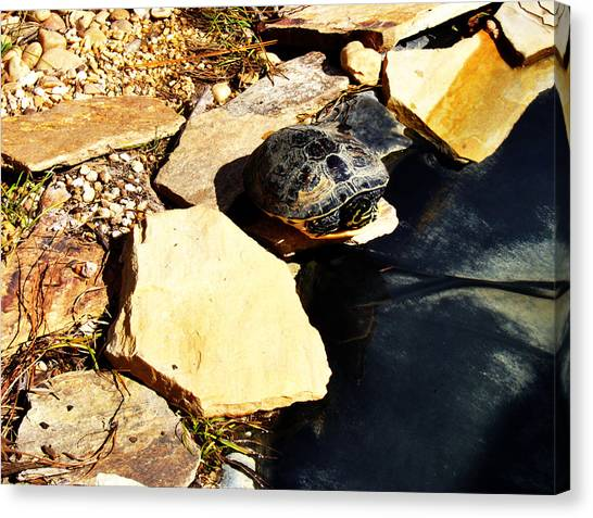 Turtle Canvas Print - Turtle by Alice Kent