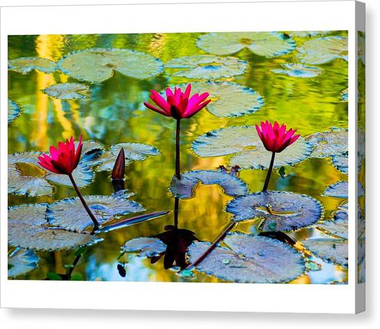 3 Water Lilys Canvas Print