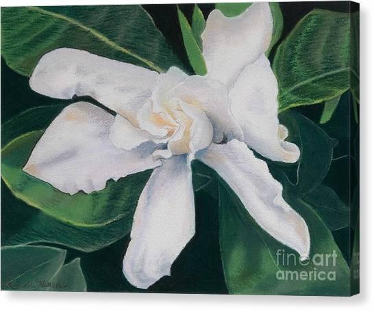 White Camelia Canvas Print by Lucinda  Hansen