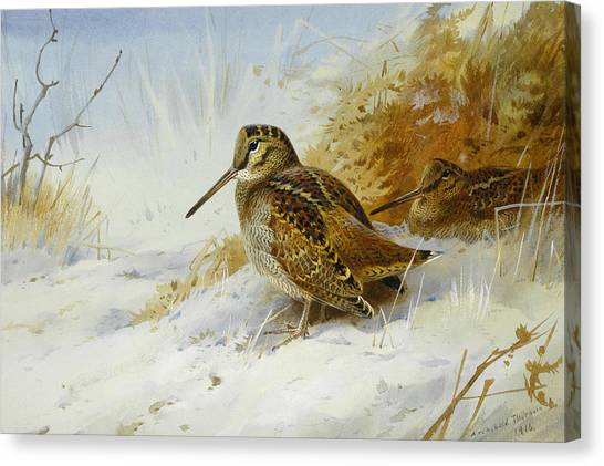 Woodcock Canvas Print - Winter Woodcock by Archibald Thorburn