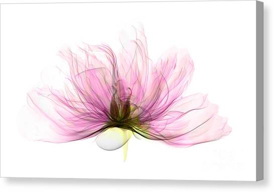 X-ray Of Peony Flower Canvas Print