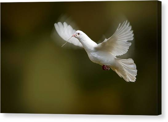 Spoonbills Canvas Print - Bird by Mariel Mcmeeking