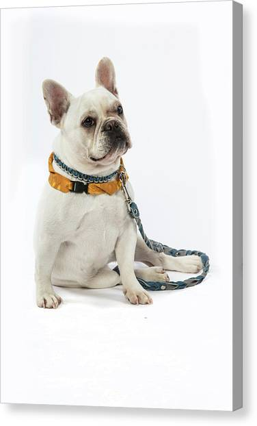 3010.068 Therapet Canvas Print