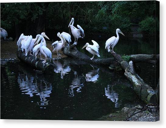 Ibis Canvas Print - Bird by Jackie Russo