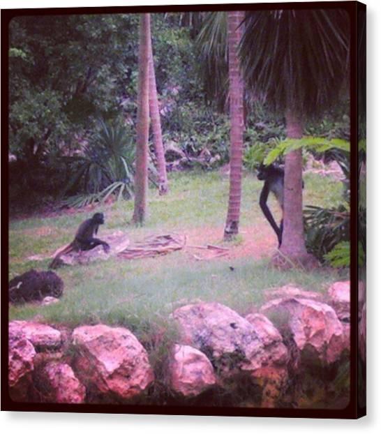 Apes Canvas Print - Instagram Photo by Claudia Garcia Trejo
