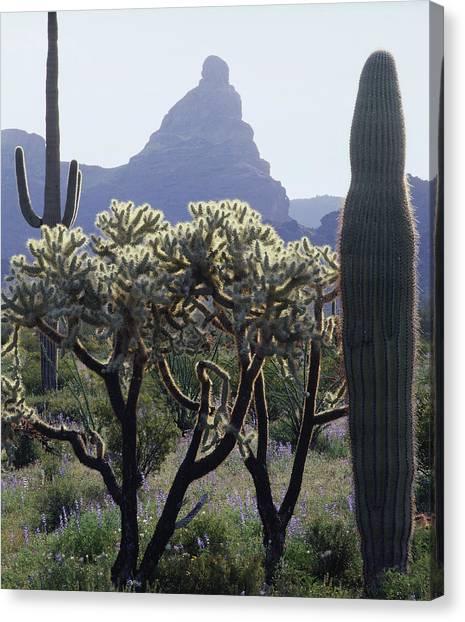 313737 Montezumas Head Canvas Print