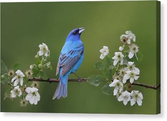 Finches Canvas Print - Bird by Super Lovely