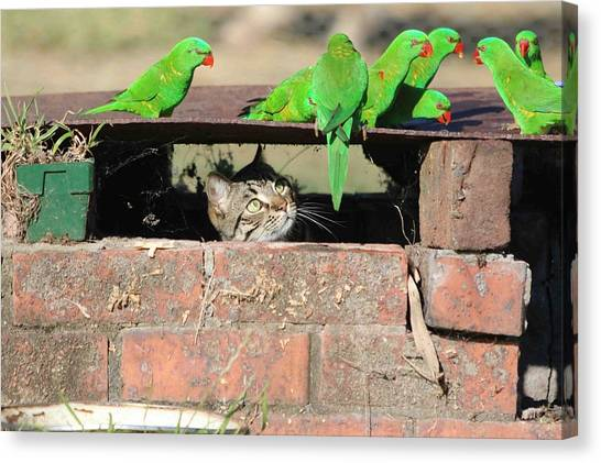 Macaws Canvas Print - Cat by Maye Loeser