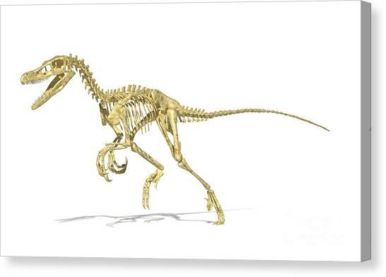 Velociraptor Canvas Print - 3d Rendering Of A Velociraptor Dinosaur by Leonello Calvetti
