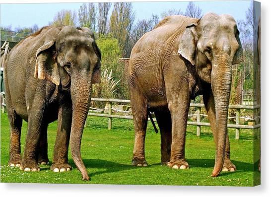 Ivory Canvas Print - African Elephant by Mariel Mcmeeking