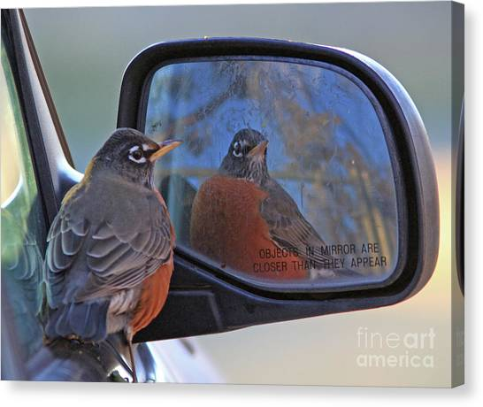Canvas Print - American Robin by Gary Wing