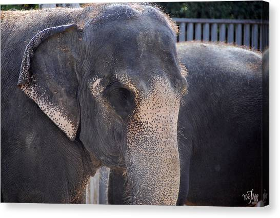 Asian Elephant Canvas Print by Thea Wolff