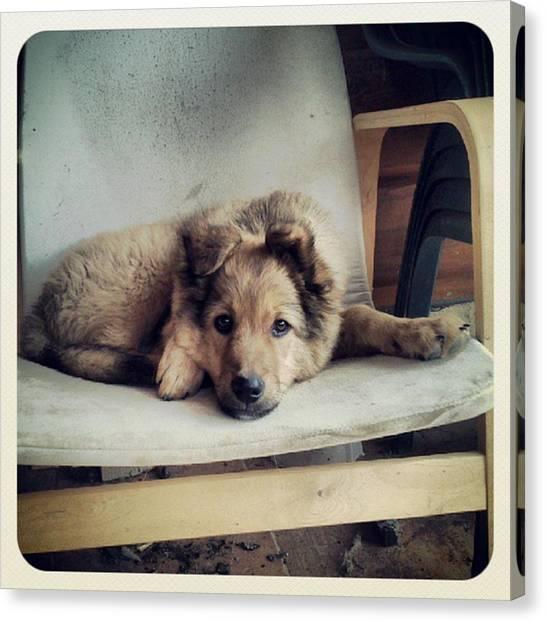 Puppies Canvas Print - Chuvak #dog #animal #pet #portrait by Rafa Rivas